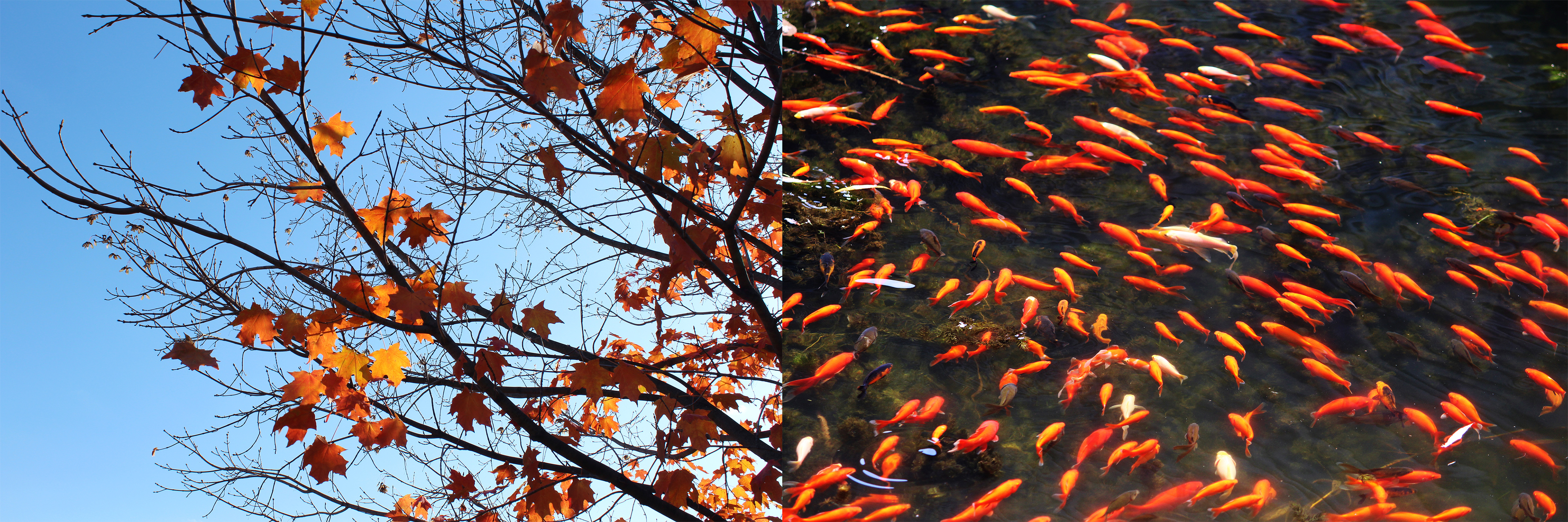 Image of a tree juxtaposed with swimming fish