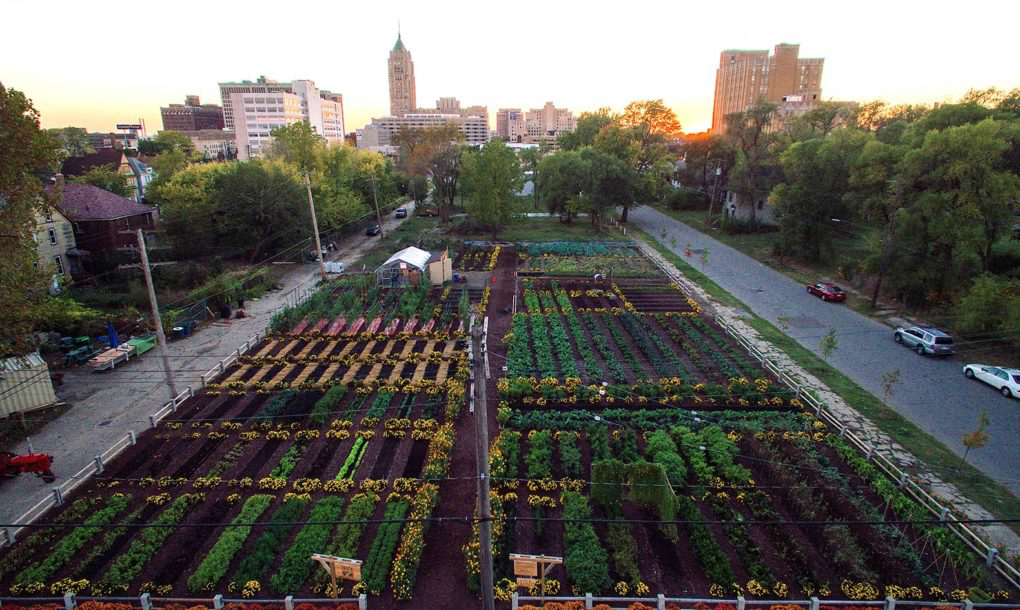 Michigan Urban Farming Initiative Garden