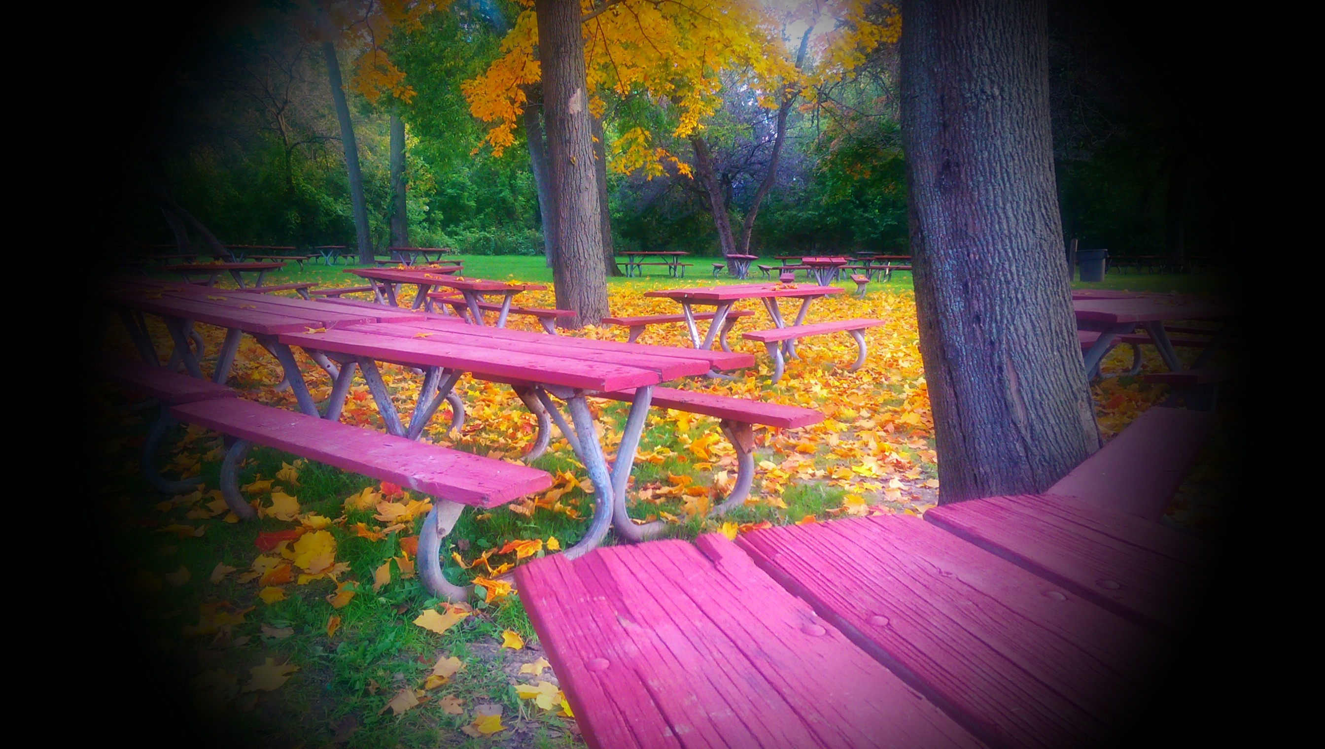 photograph of park benches